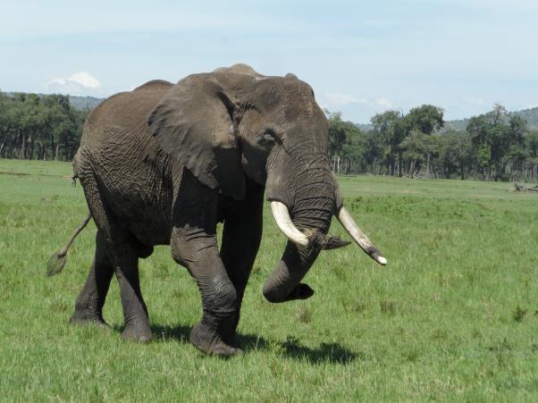 big elephant2.jpg