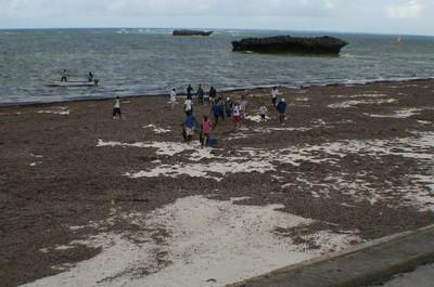 pic 3 - beach-and-seaweed.jpg
