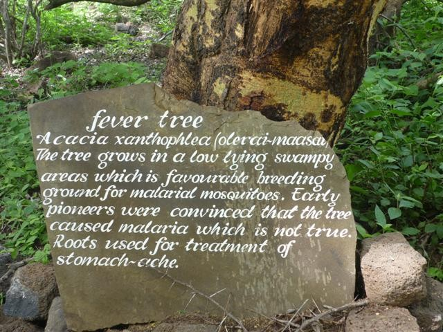 fever tree.jpg